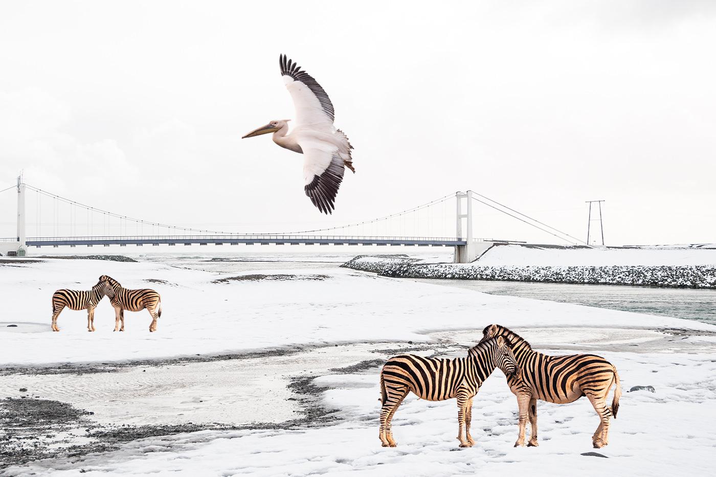 Afrika trifft auf Island | © Peter Berlinghof