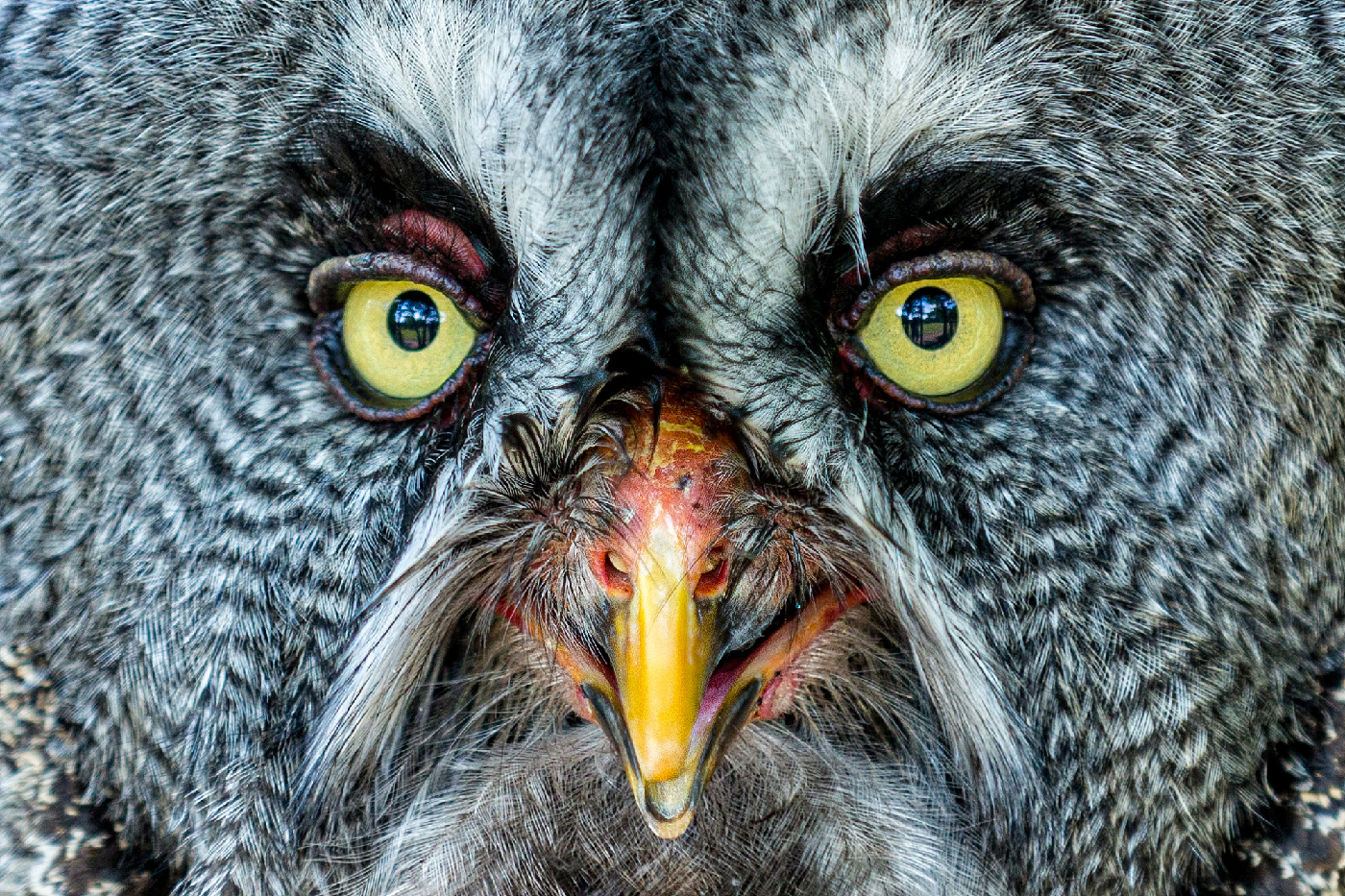Schau mir in die Augen   © Fred Eversmann