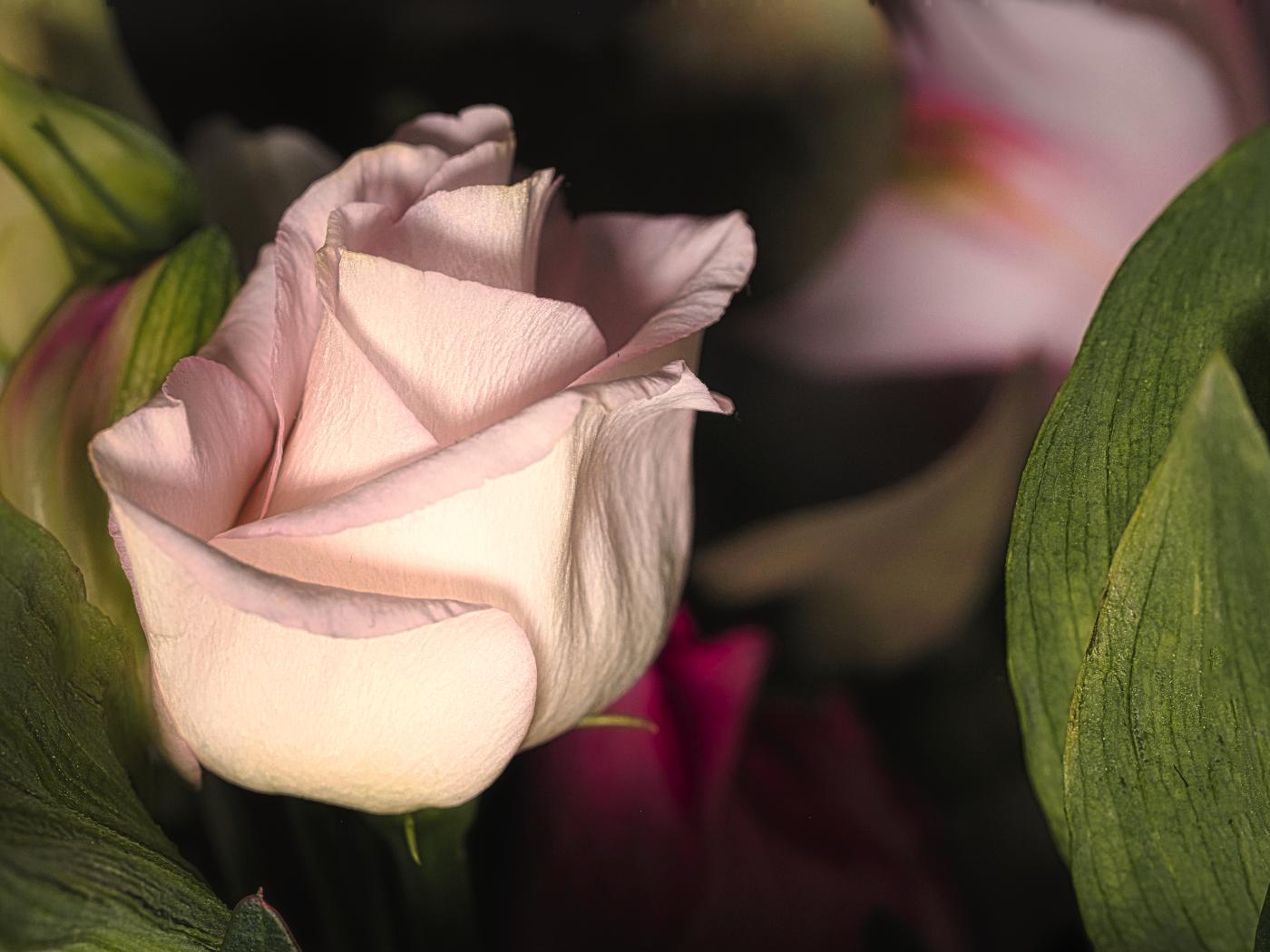 Rose   © Heike Nettler