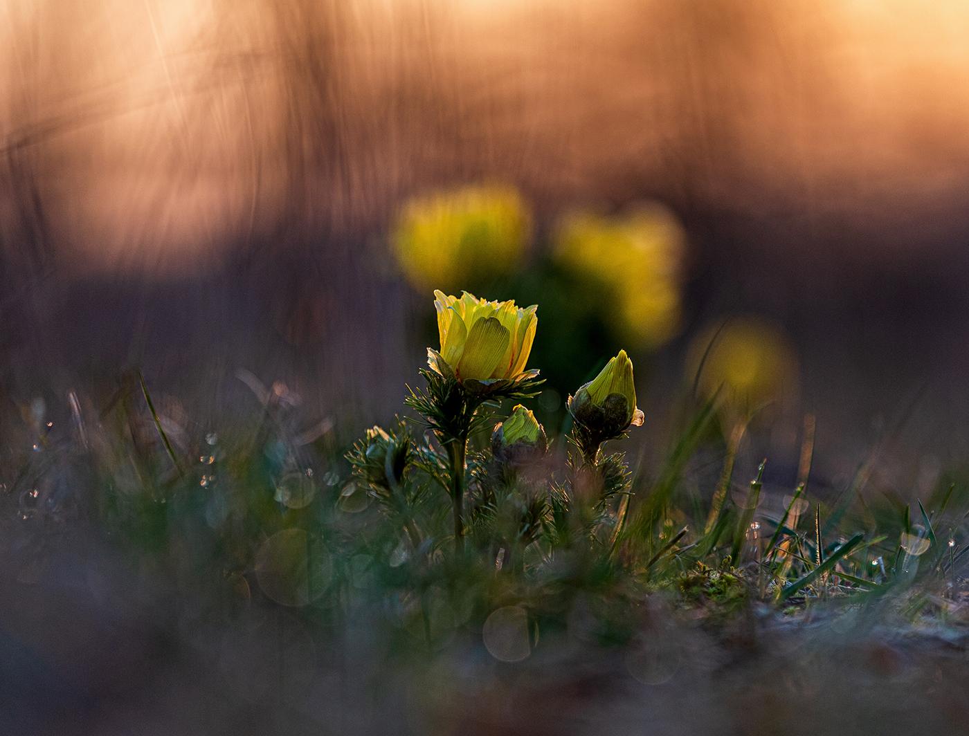 Sonnenaufgang   © Sonja Molter