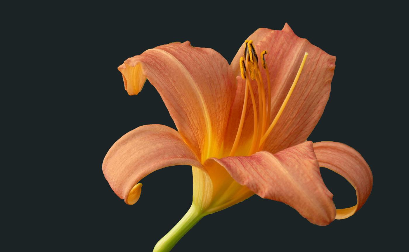 Blüte alleine   © Norbert Kraft