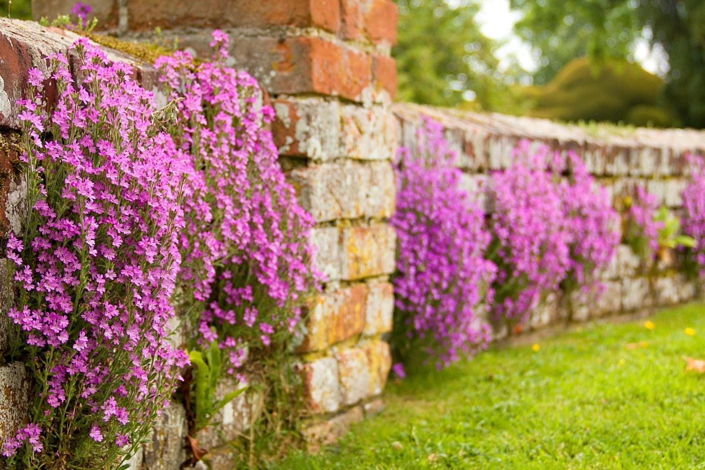Mauerblümchen   © Monika Stoffer