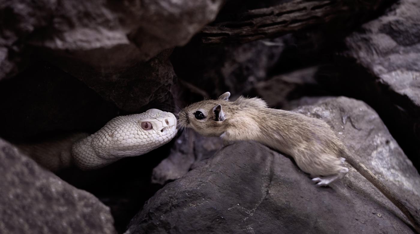 Devils Kiss |  © Irmgard Crispin