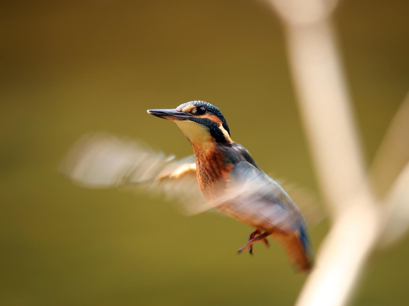 Schwebezustand  |  © Dieter Vollmer