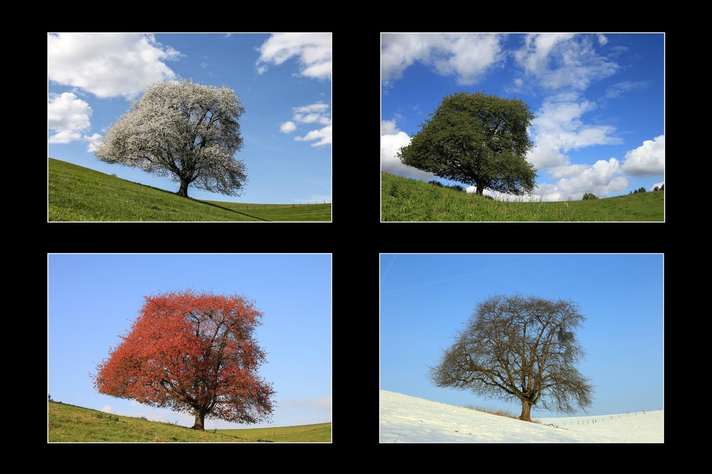 Four seasons | © Dieter Vollmer