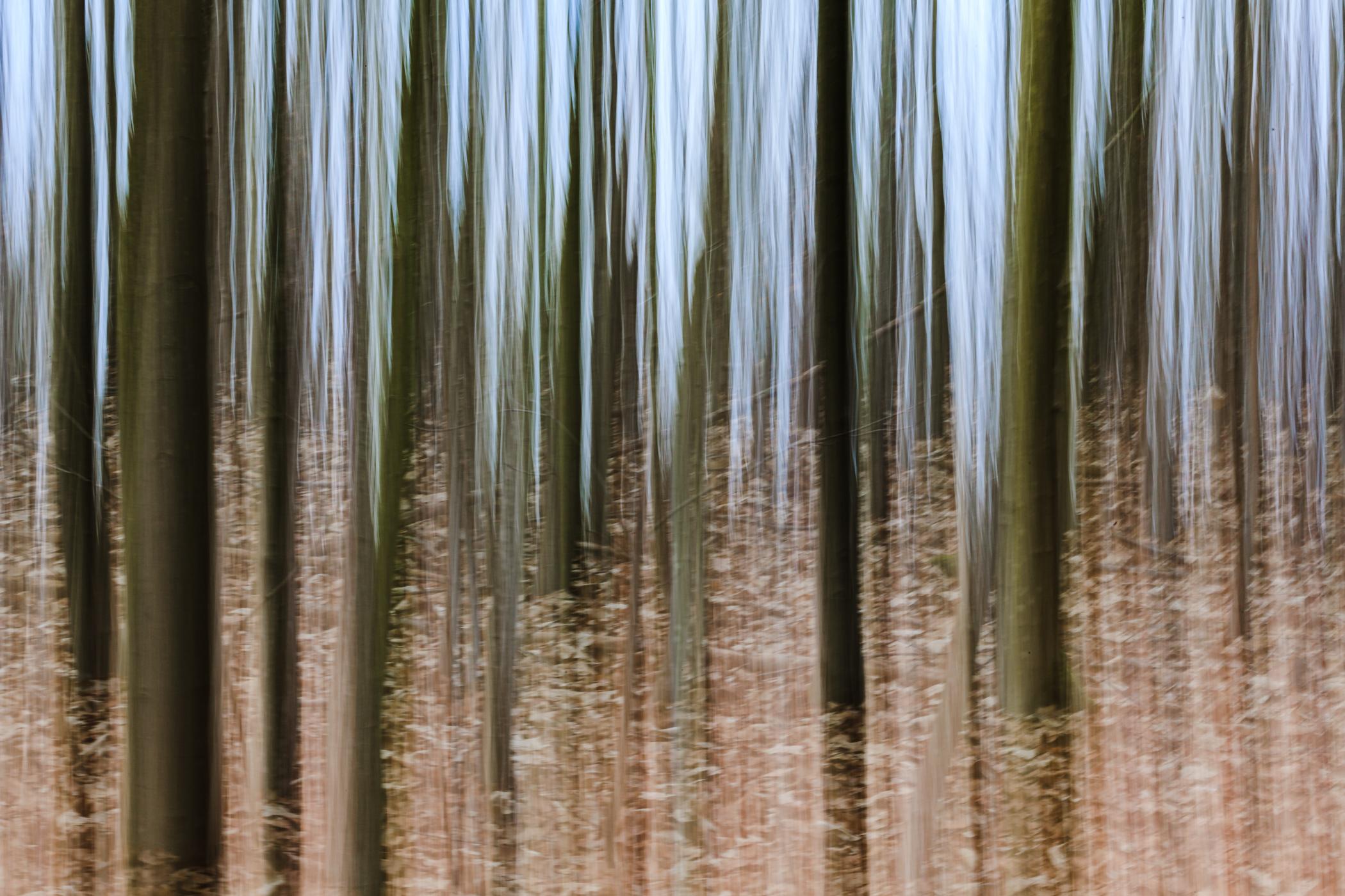 Im Wald | © Karl-Heinz Ziolkowski