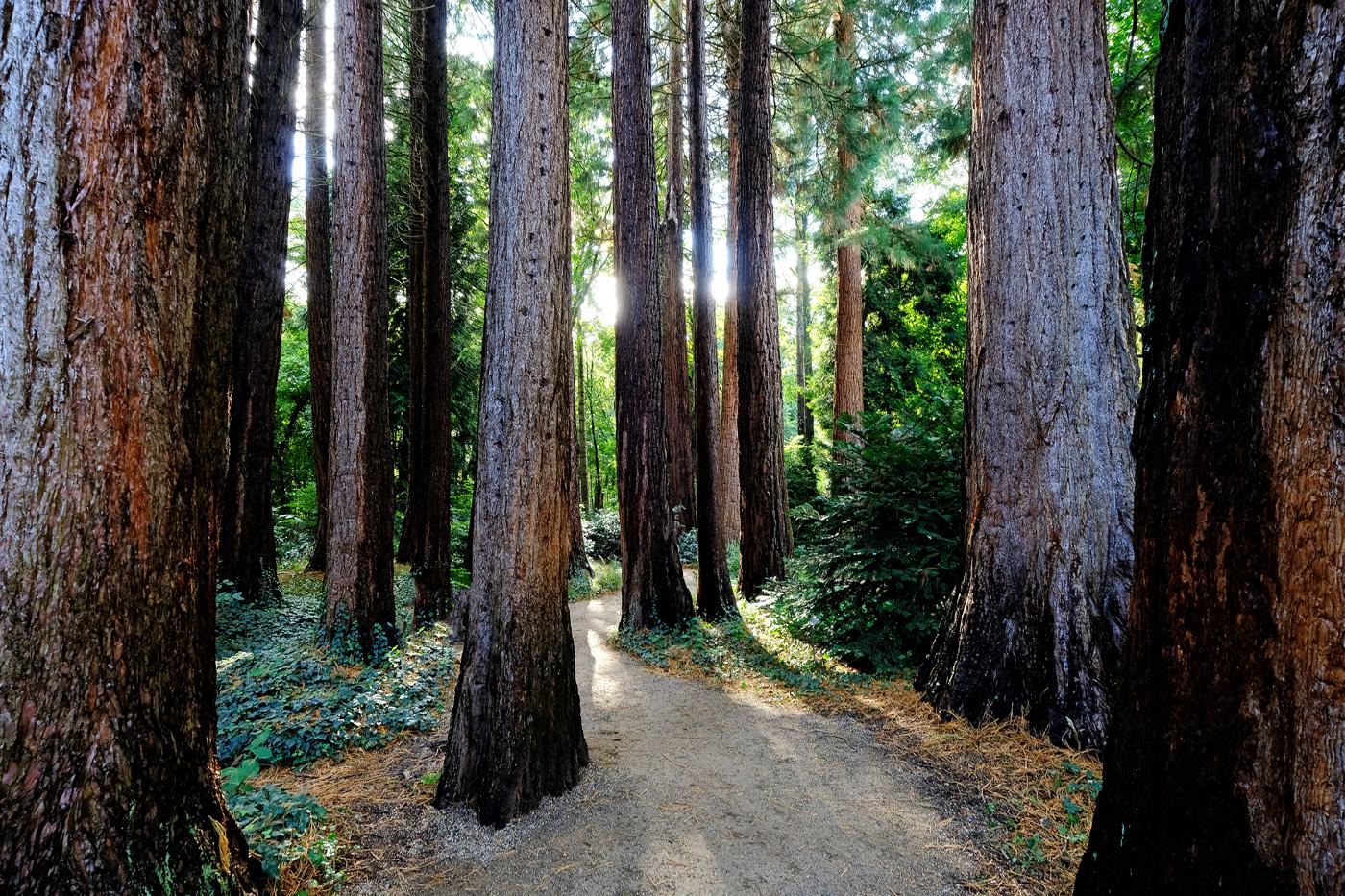 Sequoia-Park | © Günter Brombach