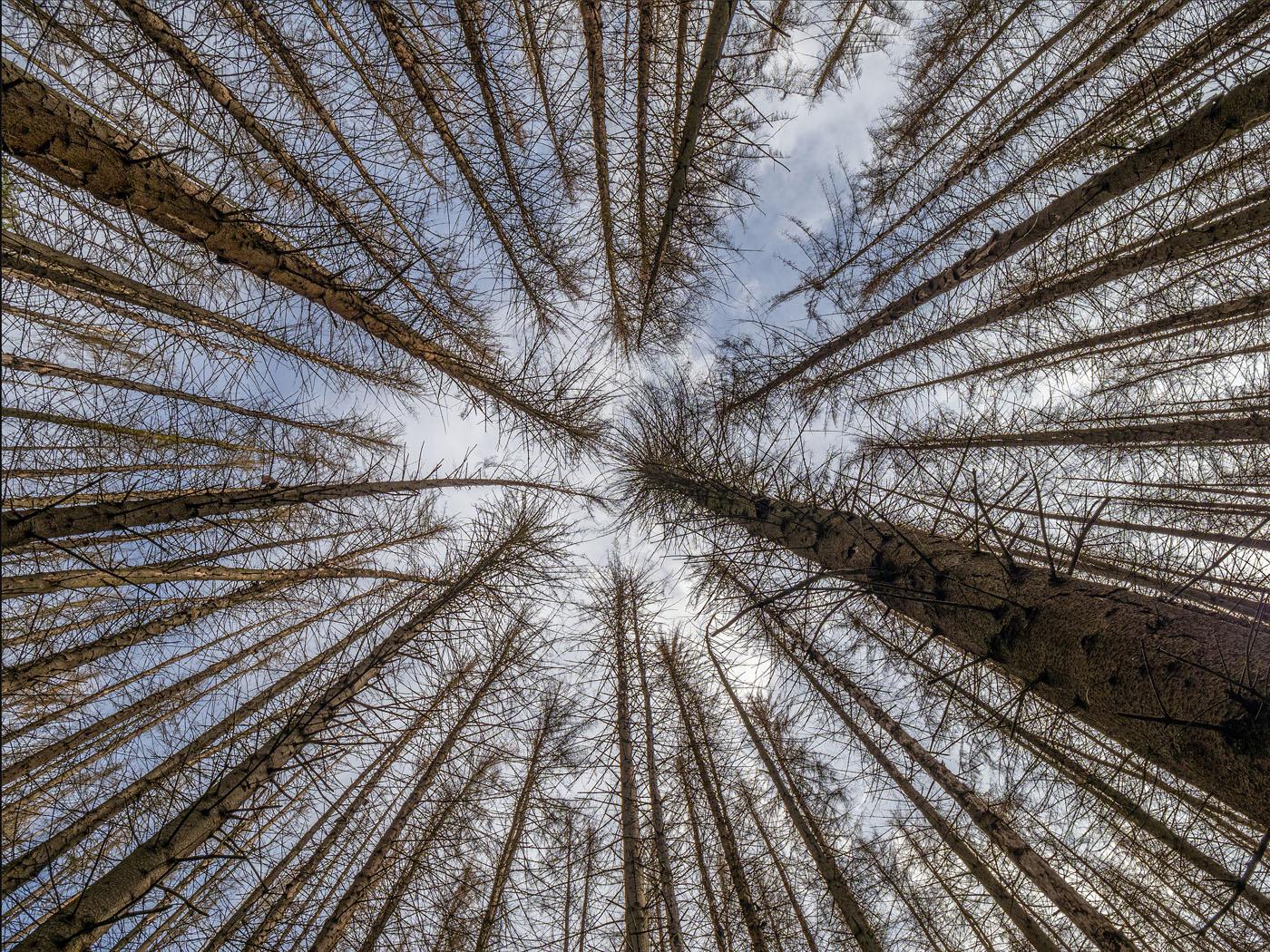 Es war einmal ein dunkler Tannenwald | © Michael Rettberg