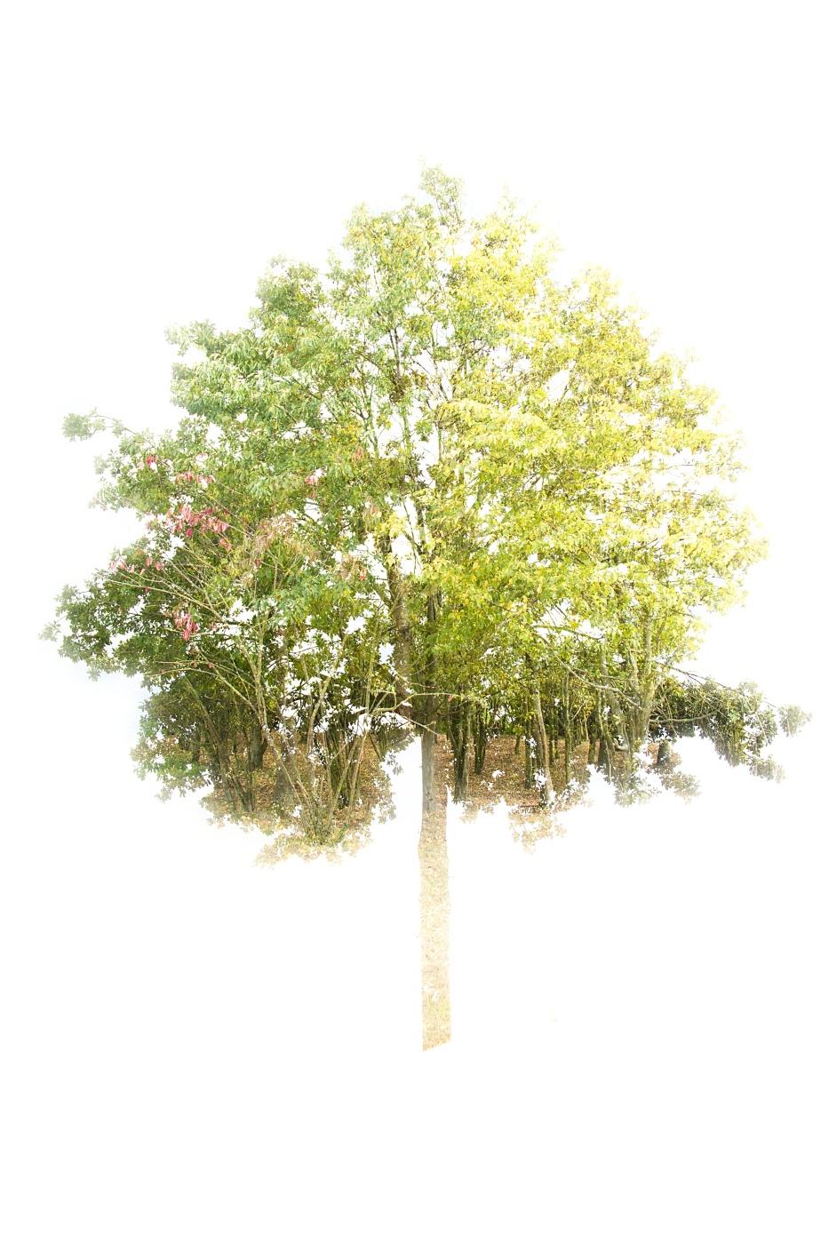 Arbor Arbores | © Monika Stoffer