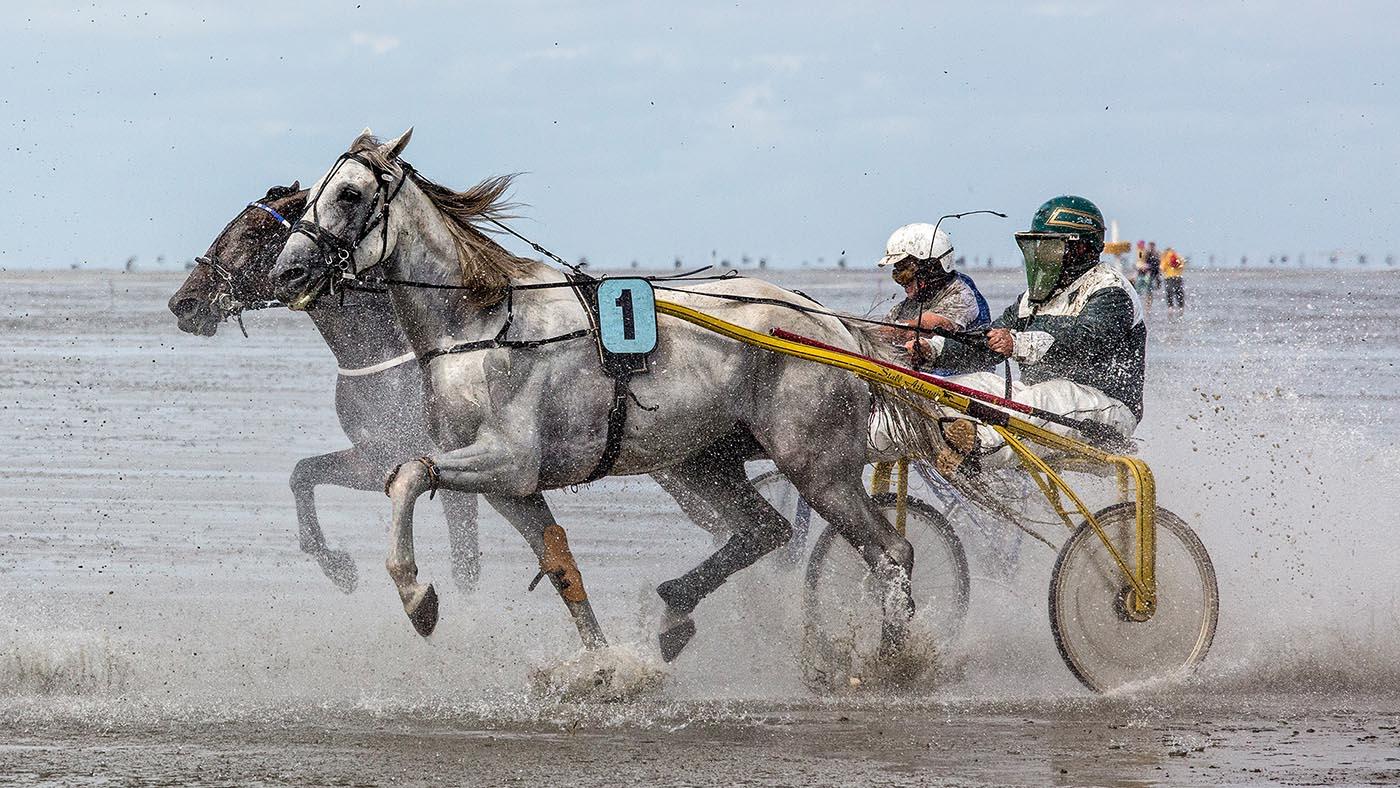Annahme: Horse race on the bottom of the ocean | © Fred Eversmann