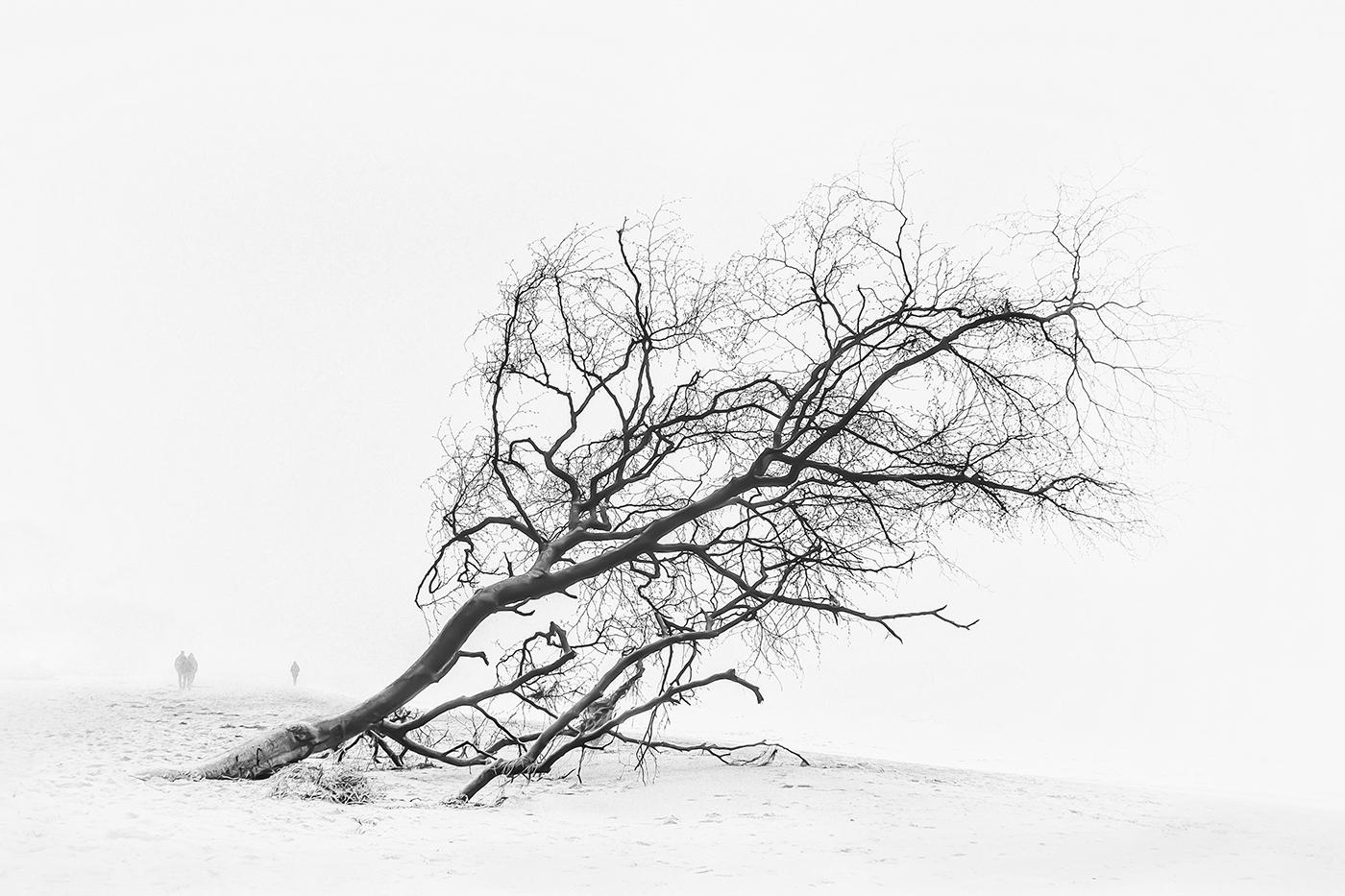 Nebel am Weststrand | © Sonja Molter