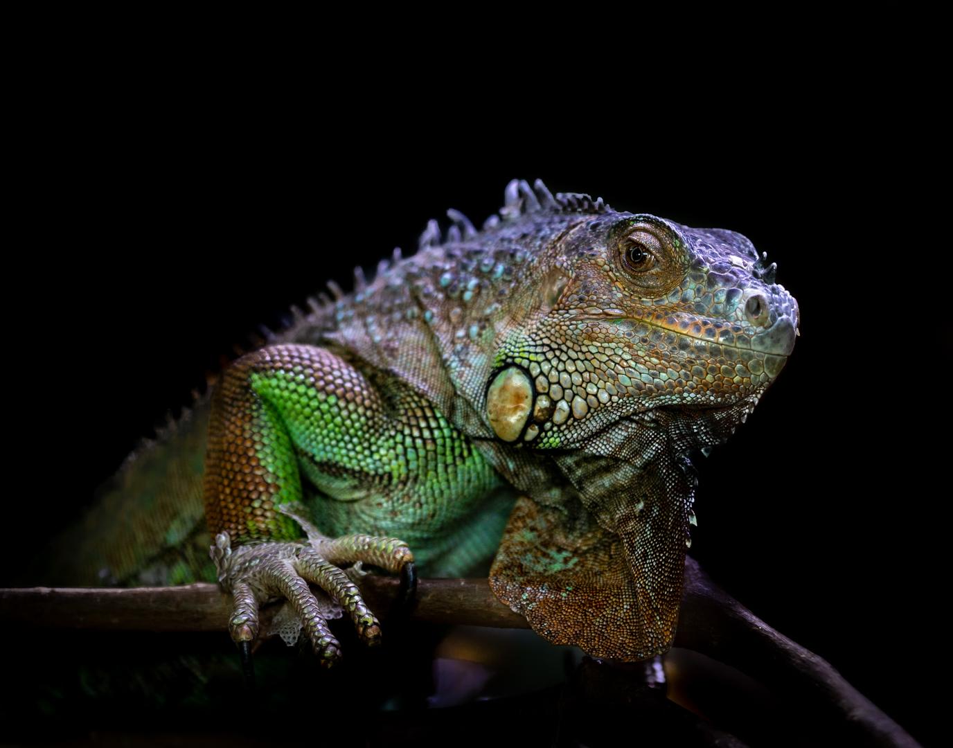 Green Dragon | © Irmgard Crispin