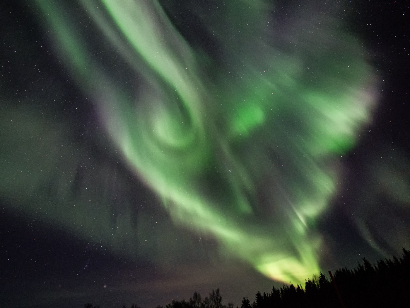 Polar phantom   © Harald Lydorf