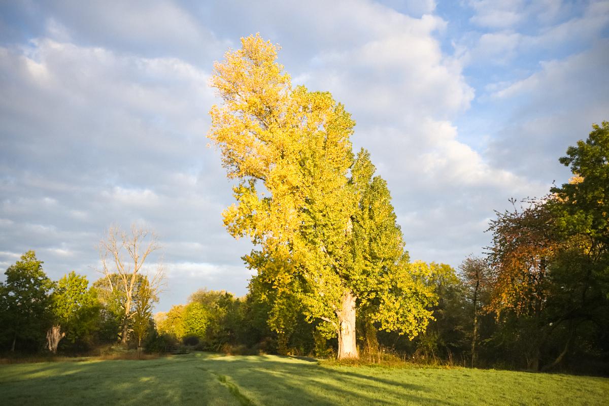 Goldener Oktober 04   © Elmar Kemnade