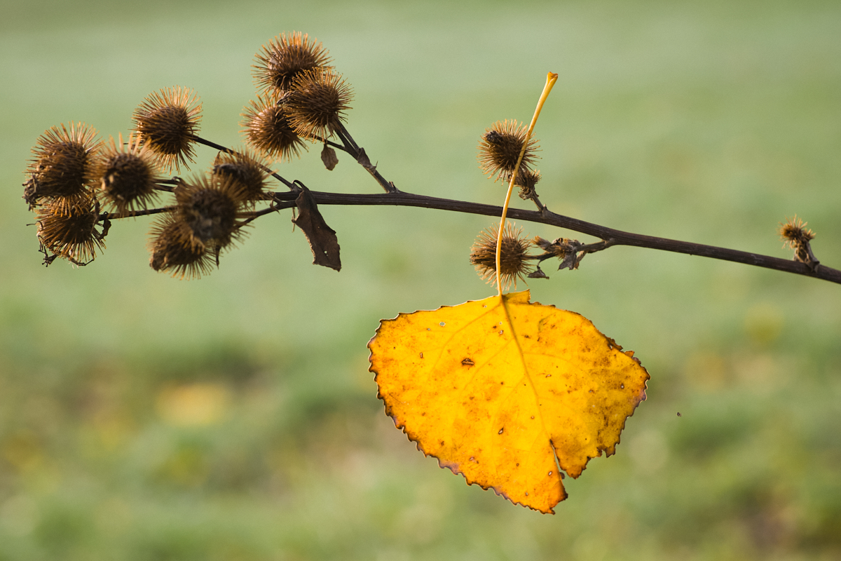 Goldener Oktober 07   © Elmar Kemnade