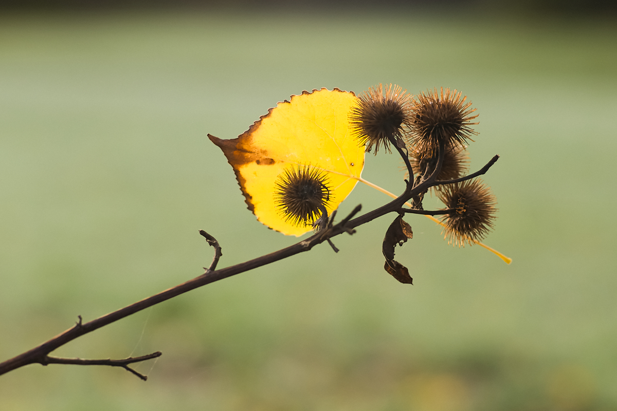 Goldener Oktober 08 | © Elmar Kemnade