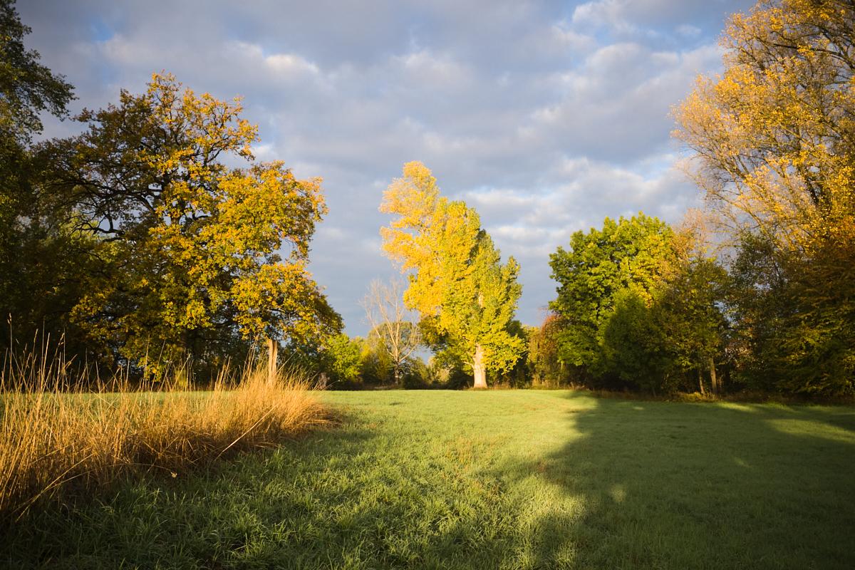 Goldener Oktober 09   © Elmar Kemnade