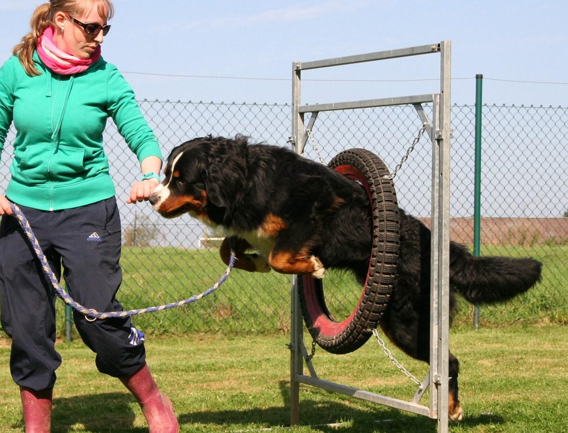 Hundetraining | © Monika Stoffer