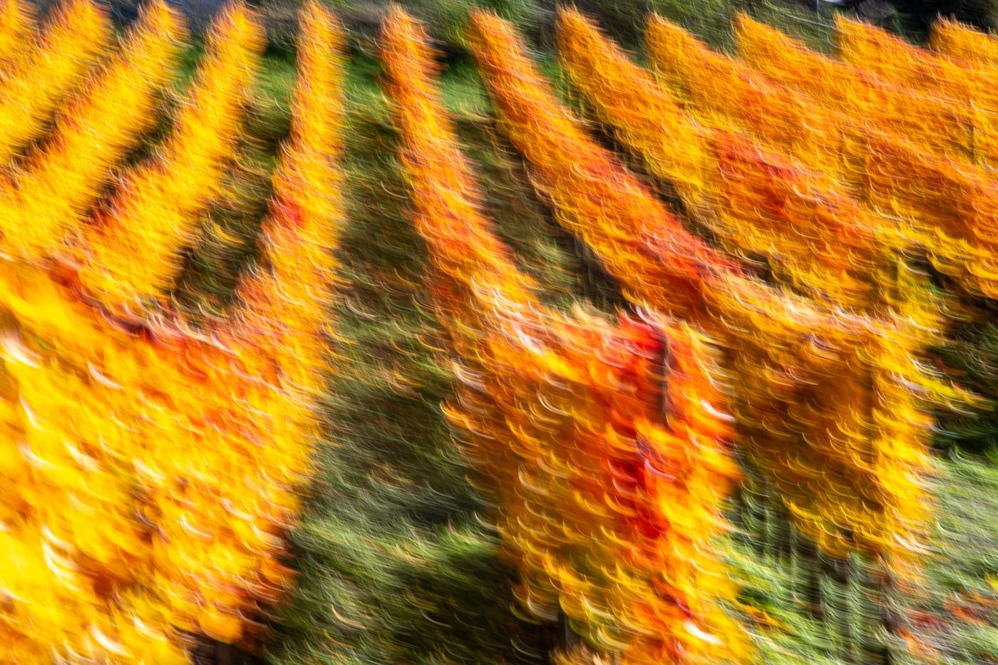 Danzin Harvest | © Roland Gras