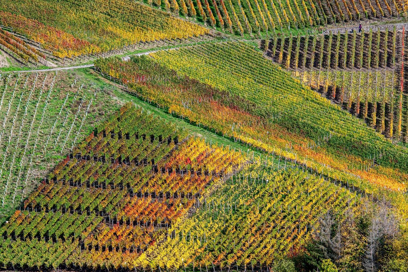 Structured Wineyards | © Roland Gras
