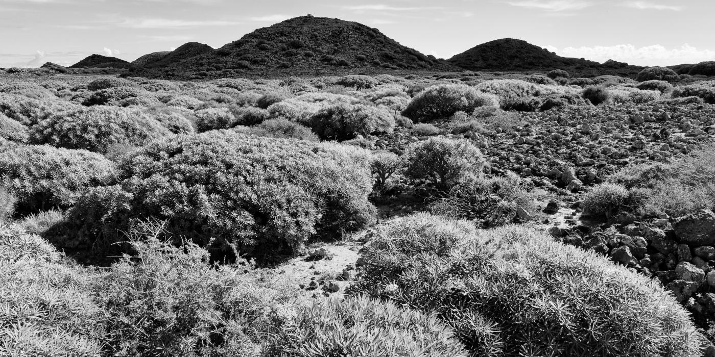 Isla de Lobos 11   © Peter Berlinghof