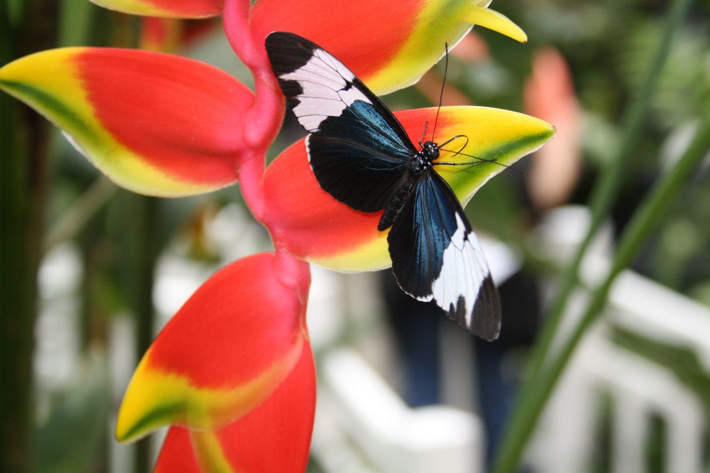 Schmetterlingspark Sayn | © Heinz-Dieter Klauß