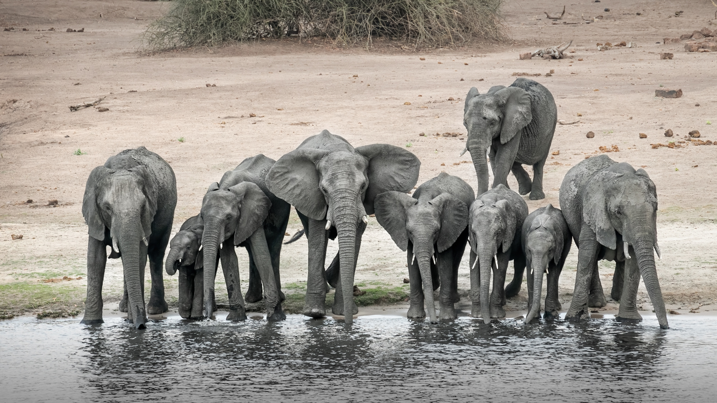 Thirsty elephant | © Irmgard Crispin