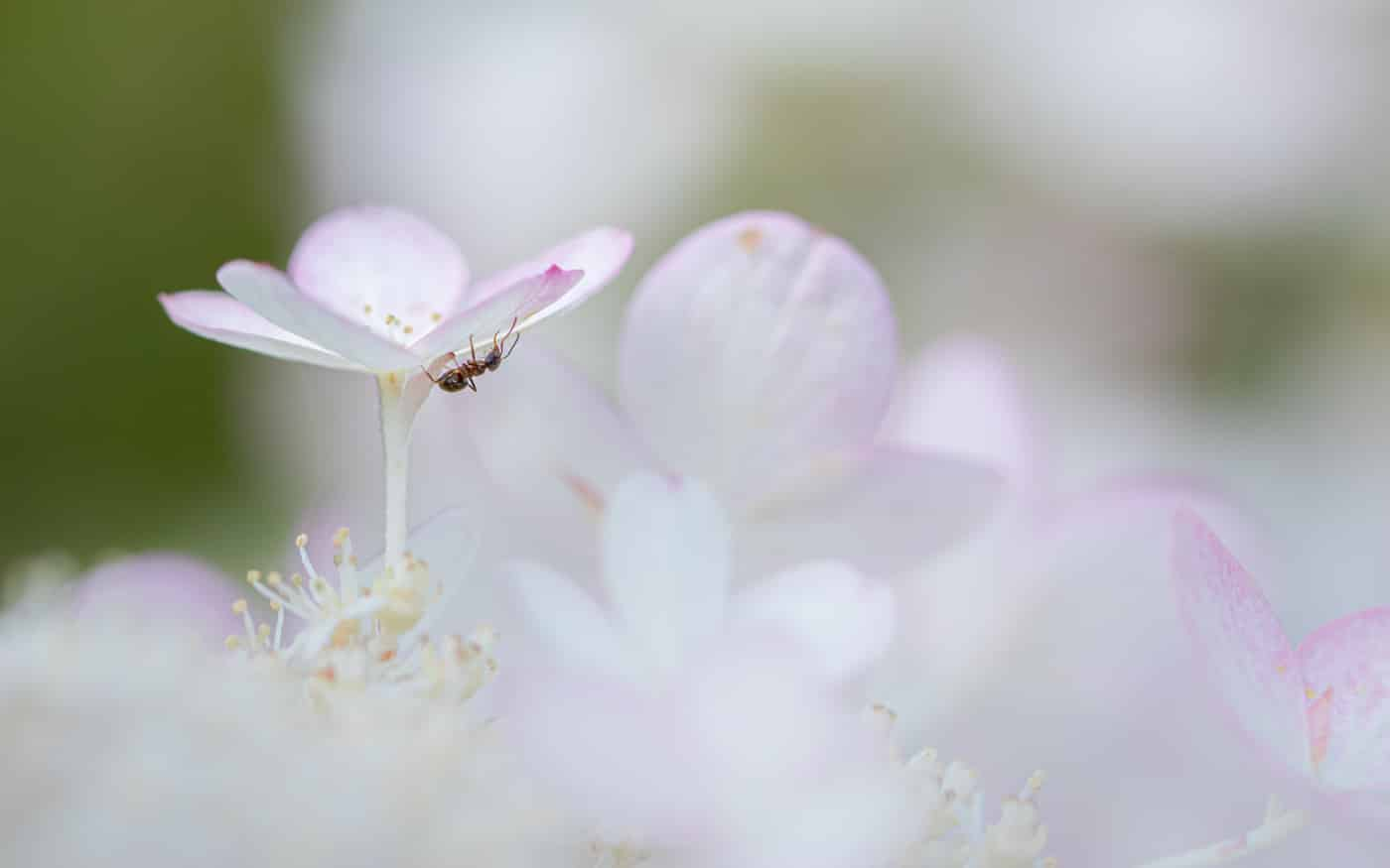 Ant | © Irmgard Crispin
