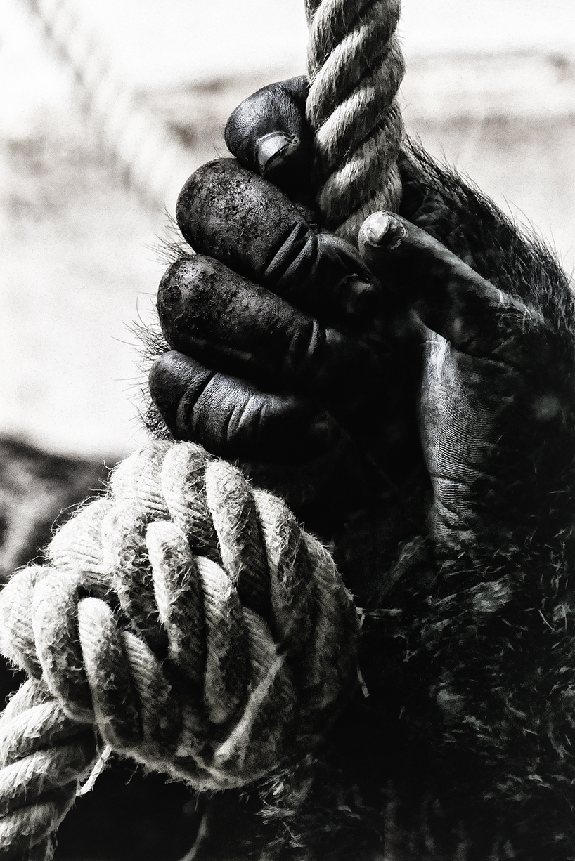 1. Platz: Hand | © Dr. Doris Nsiff